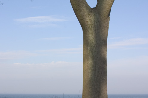 Tree at the Sea